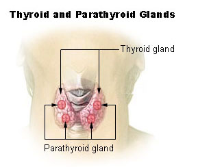 thyroid parathyroid image