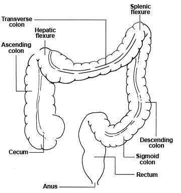 Colonscopy Anatomy